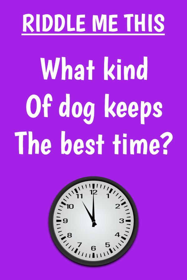 What kind of dog keeps the best time
