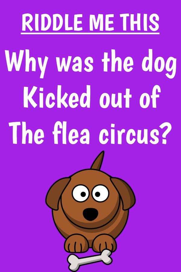 Why was the dog kicked out of the flea circus