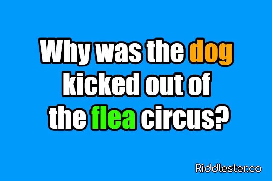 riddle dog