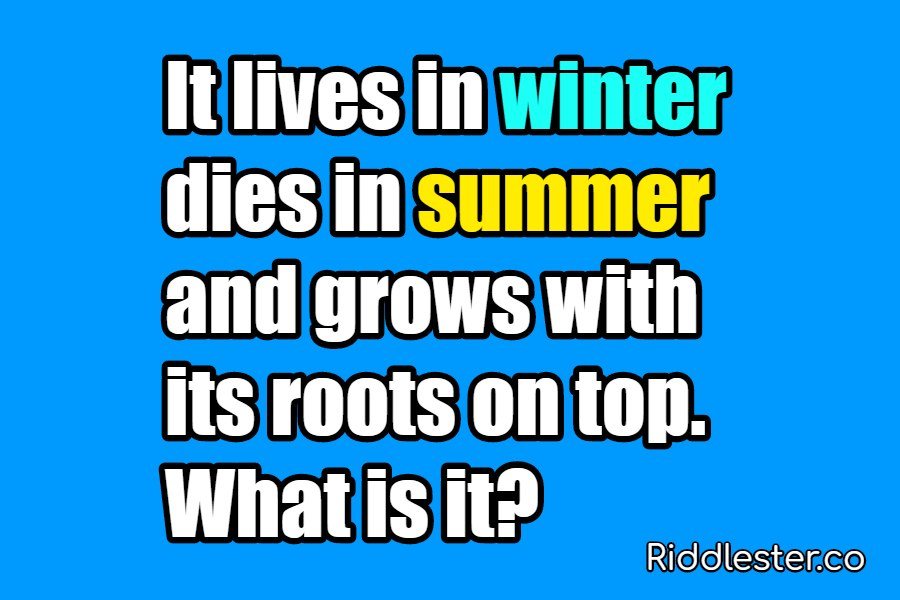 It lives in winter dies in summer and grows with its roots riddle