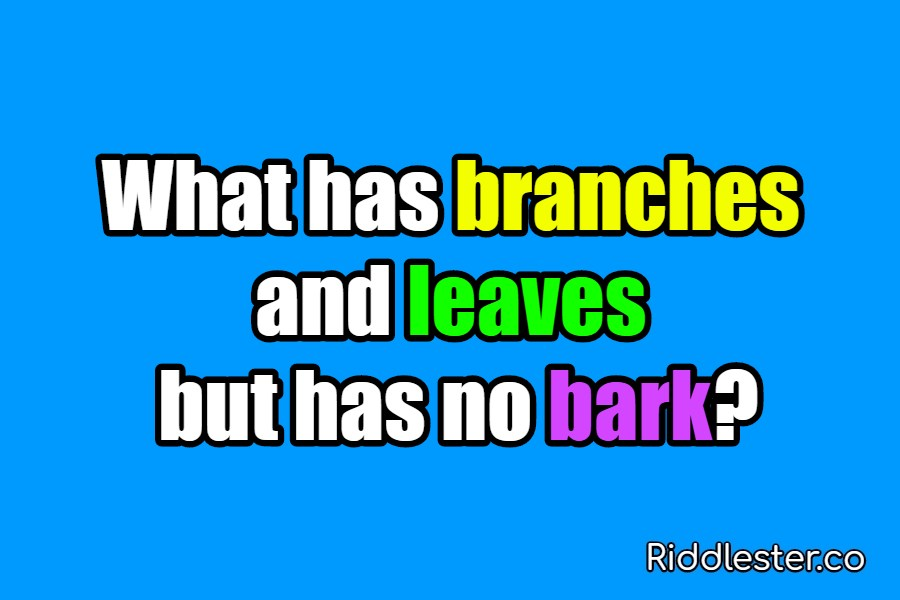 riddle branches and leaves
