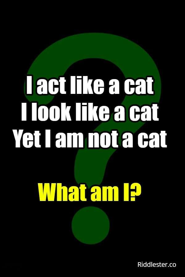 I act like a cat I look like a cat