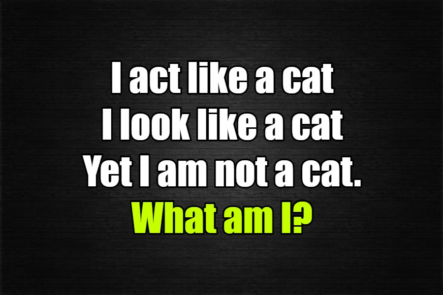 I act like a cat I look like a cat riddle