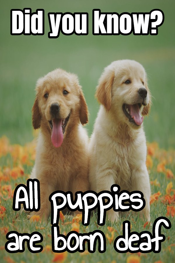 amazing fun facts about dogs
