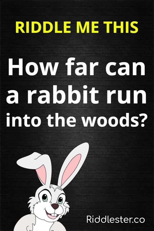 rabbit riddle