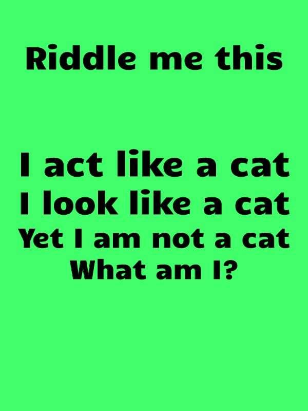 riddle cat