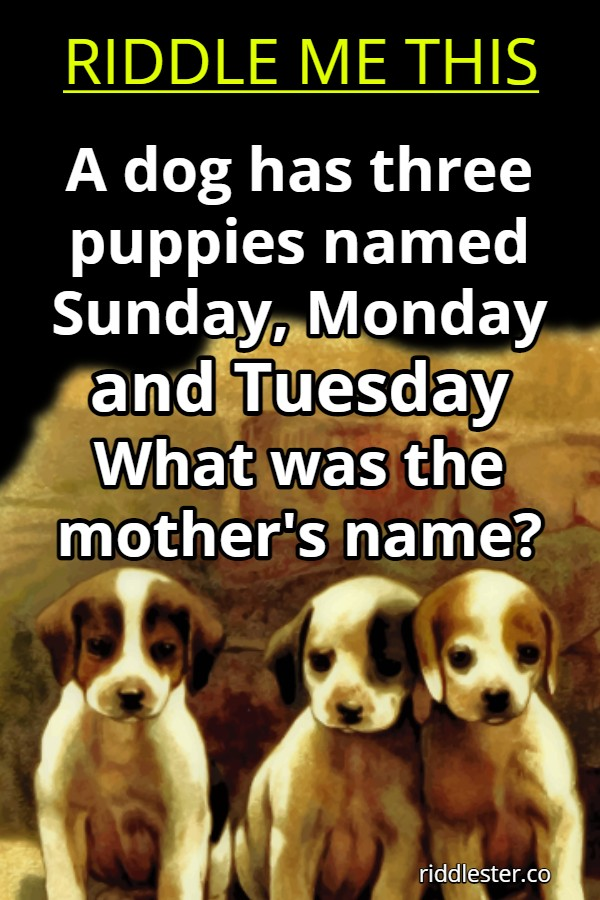 A dog has three puppies