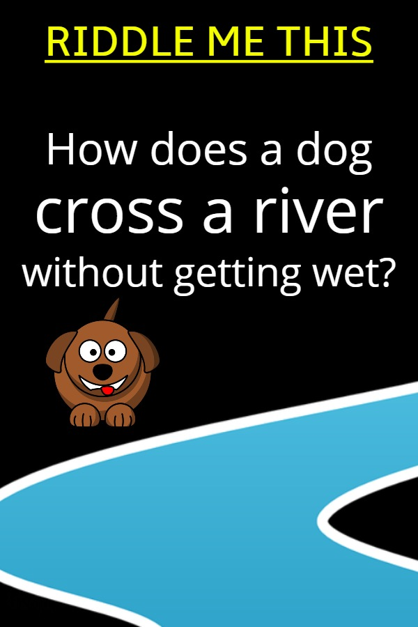 How does a dog cross a river without getting wet